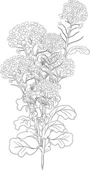 Rape blossoms (coloring)