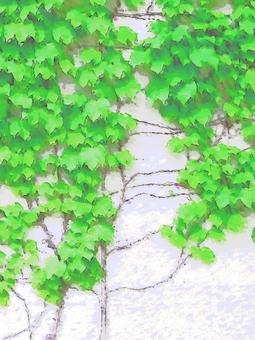 Ivy on the wall (photographic processing)