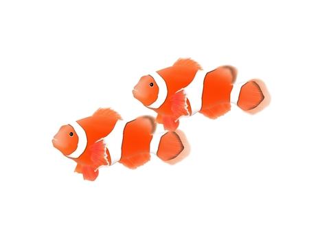沖繩魚銀蓮花屬例證