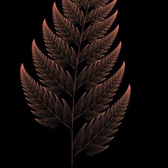 Dead leaves of fern plant