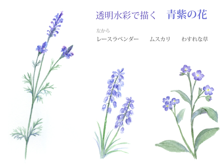 Blue-purple flowers drawn with watercolors