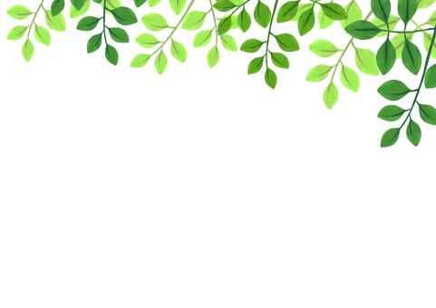 Leaf frame from above