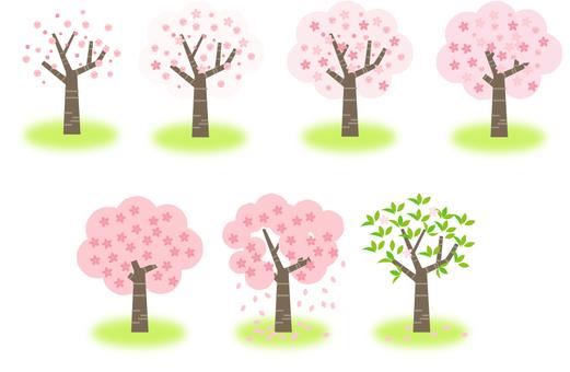 最好的時間去看櫻花