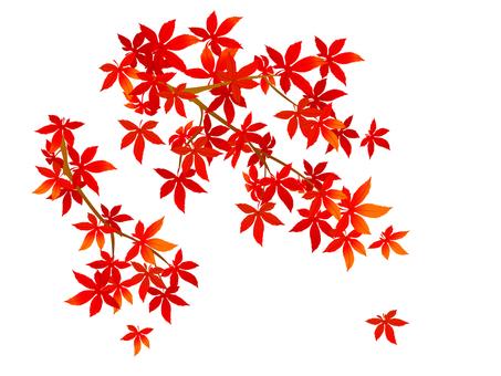 Leaves ~ foliage ~