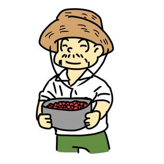 Bean cultivation