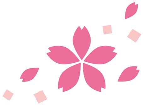 Sakura (Sakura) 3
