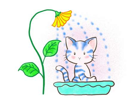 Bathing cat 1