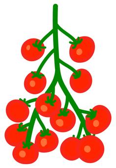 주렁주렁 토마토 2