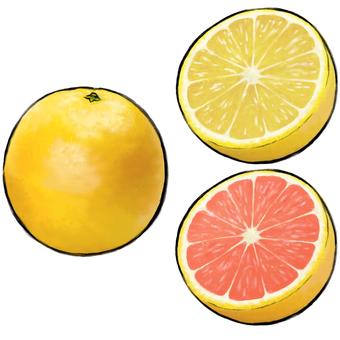 과일 (자몽)