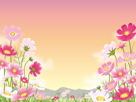 Sunset background with cosmos field and clouds (with mountains)