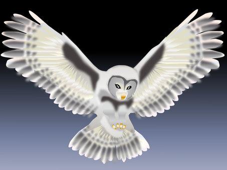 Fly 梟 07