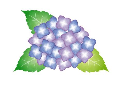 Watercolor style hydrangea purple
