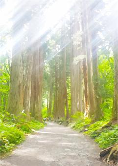 Big cedar forest