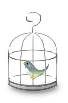 Bird's bird