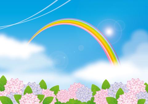 Rainbow and blue sky and hydrangea