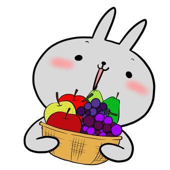 과일 바구니와 토끼 그레이