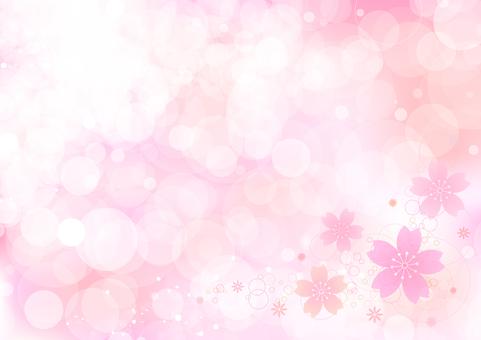 Cherry blossoms 214