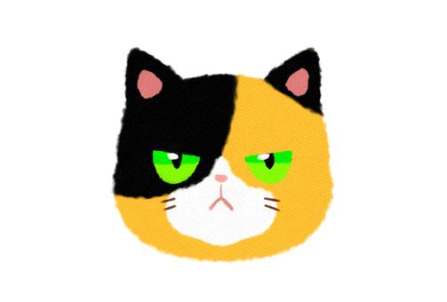 Face of three tortoiseshell Jito / angry face