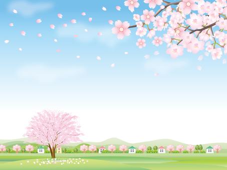 벚꽃이 만개 한 봄 풍경 백