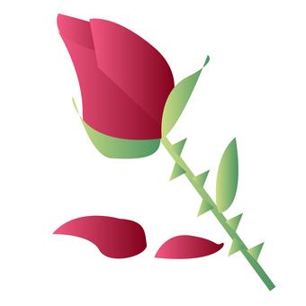Roses bud