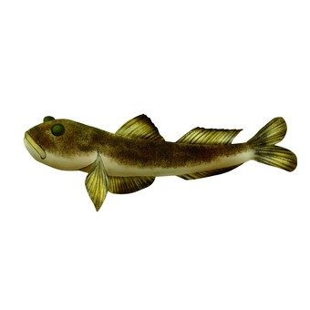 Goby 1