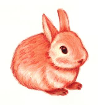 Rabbit chako (child rabbit) 2