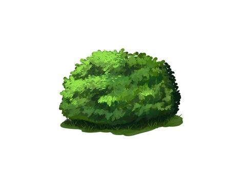 Shrub material green plant