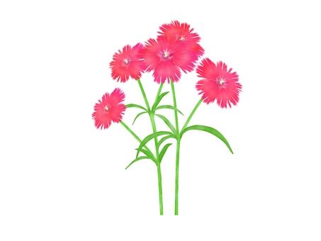 패랭이꽃의 꽃 일러스트 빨간색