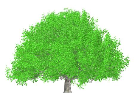 큰 나무 _004