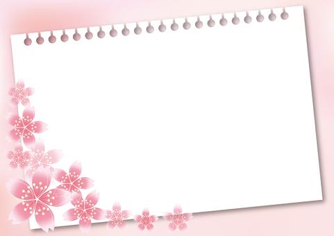 Sakura Sakura & Board 41