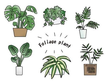 Houseplant set