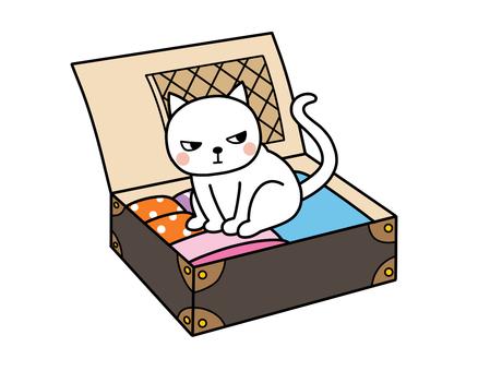 주인과 여행 가고 싶은 고양이 씨 1