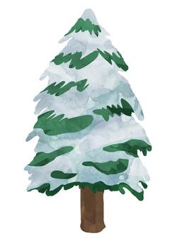 針葉樹 -雪- ② 植物 水彩