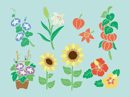 여름 꽃 세트 (선 없음)