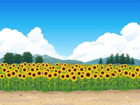 (RGB) Summer sunflower field and whirlpool background 01