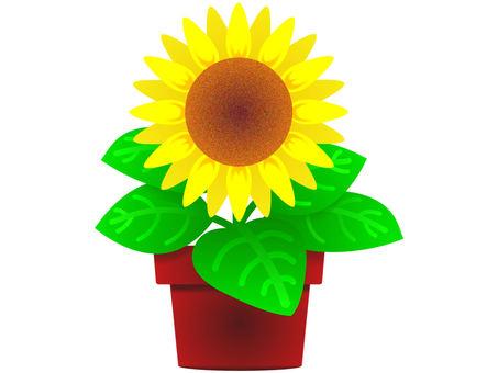 Mini sunflower 1