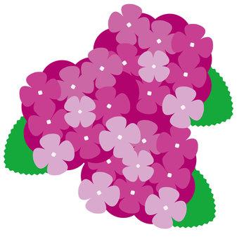 繡球花4-2