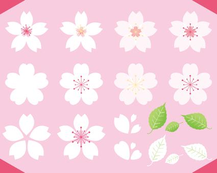 春らしいピンク白抜きの可愛い桜のセット