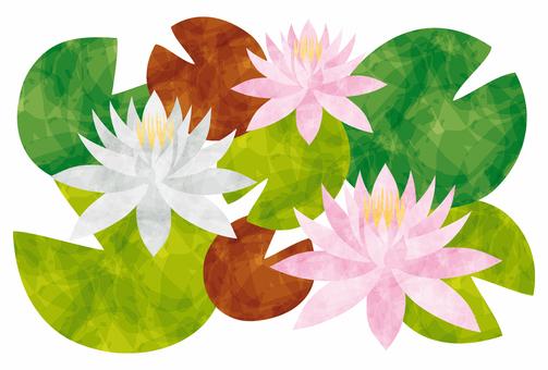睡蓮/睡蓮の花