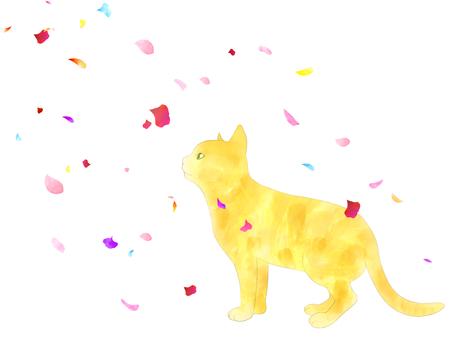 고양이와 꽃잎