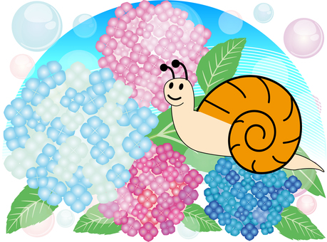 Snails and hydrangeas