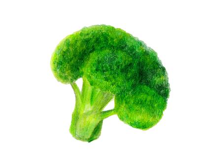 Broccoli (color pencil drawing)