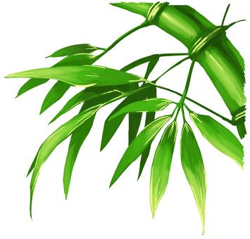 대나무 대나무