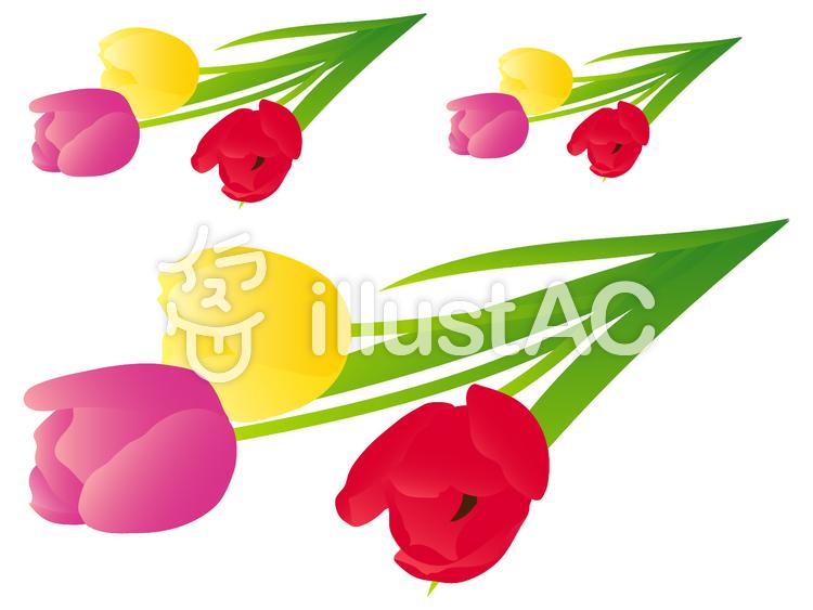 三色のチューリップ(黄、ピンク、赤)