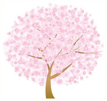 Cherry blossom illustration Floret