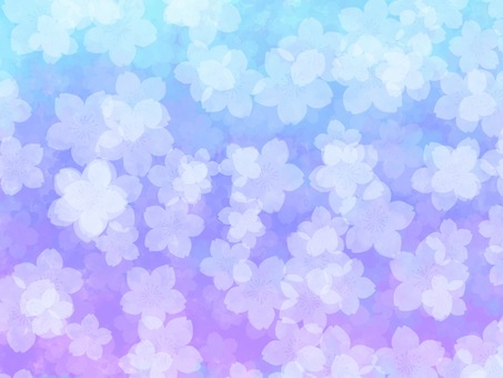 Cherry blossoms cold background material wallpaper cool