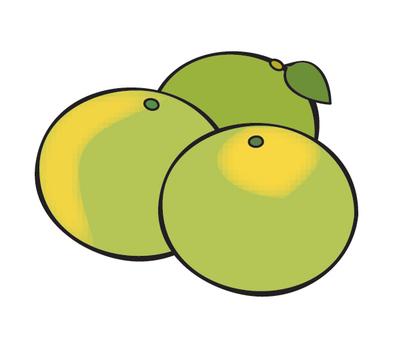 Waseda oranges