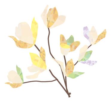 Up of white magnolia