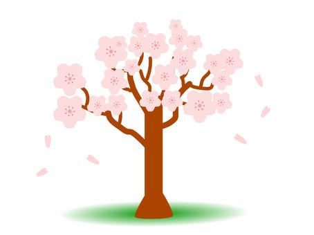 一棵櫻花樹,春天的春天
