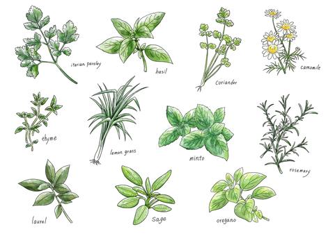 허브 -herb-